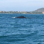 Ocean Friendly Whale Watching Tours Foto