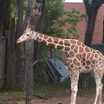 Foto de Lincoln Park Zoo