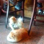 dogs prancing around restaurant