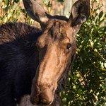 BrushBuck Wildlife Tours - Day Tours Foto