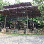 Sun protection for the elephants.
