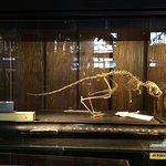 Foto di Grant Museum of Zoology