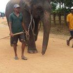 Pinnawala Elephant Orphanage Foto