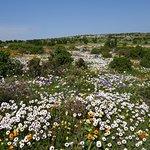Spring flowers Westcoast National Park
