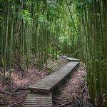 bamboo boardwalk