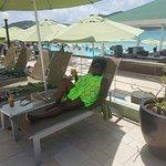 Sonesta Great Bay Beach Resort, Casino & Spa Foto