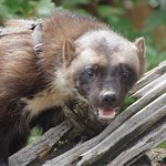 Foto di Kroschel Films Wildlife Center