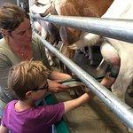 Dartington Dairy