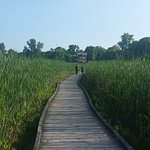 Point Pelee National Park Photo