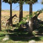 Foto de Living Desert Zoo & Gardens