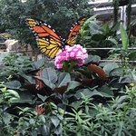 The colorful butterfly is oart of the Lego art display.