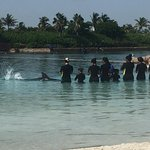 Dolphin Cay experience was amazing!!