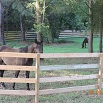 Working horse farm