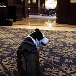 Penny and her morning visit to the Lobby area next to the Atlas Grill