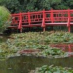un petit pont sur un lac de nénuphars