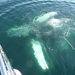 Photo de Eagle Wing Whale Watching Tours