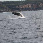 Photo de Fantasea Cruising Sydney