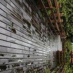 Boardwalk on the rain.