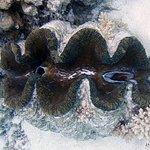 Foto Aitutaki Lagoon Resort & Spa