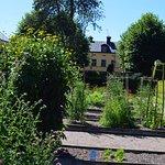 Linnaeus Garden