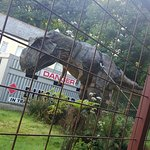 Photo de Combe Martin Wildlife and Dinosaur Park
