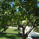Photo of Finca Binibona Parc Natural