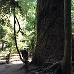 Cathedral Grove Foto