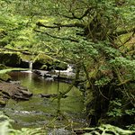 Woodland walk with abundant waterfalls!