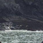 Seals on rocks near Mortehoe