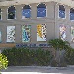 The Bailey-Matthews National Shell Museum Foto