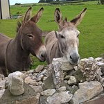super friendly donkey - tip: they like apples ;)