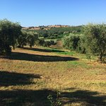 A view towards the olive trees towards the grape vines.