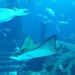 Aquarium mitten im Hotel