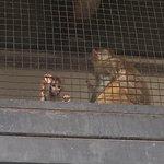 Beijing Zoo Foto
