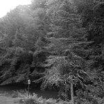 Foto di Whisperin' Pines Chalet