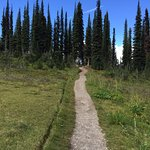 Foto de Mount Revelstoke National Park