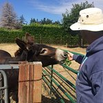Cleo the donkey greets her visitor