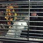 Moaï le perroquet