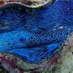 Foto di Wavelength Reef Charters