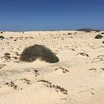 Photo de Parque Natural de Corralejo