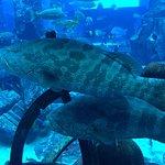 The Lost Chambers Aquarium Foto
