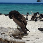 Photo of Michaelmas Cay