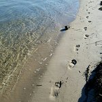 Monomoy beach walk