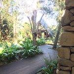 Tsala Treetop Lodge-bild