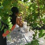 Pleasant Hill Winery Foto