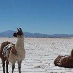Foto de Caravana De Llamas Day Tours