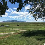 Sonoita Vineyards Foto