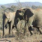 Rhulani Safari Lodge Picture