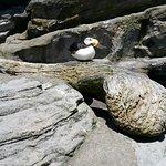 Foto de Oregon Coast Aquarium