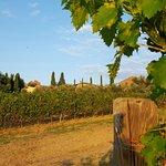 Borgo widziane z winnicy